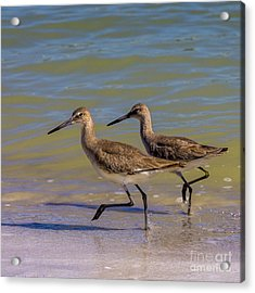 Walk Together Stay Together Acrylic Print by Marvin Spates