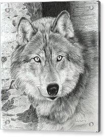 Watchful Eyes Acrylic Print by Carla Kurt