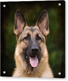 Watchful Acrylic Print by Sandy Keeton