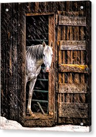 Watching The Snow Fall Acrylic Print by Bob Orsillo