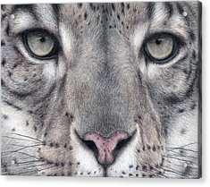 Watching You...snow Leopard Acrylic Print by Pat Erickson