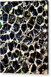Water Cells Acrylic Print by Ross Odom