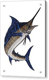 Water Color Tribal Marlin IIi Acrylic Print by Carol Lynne