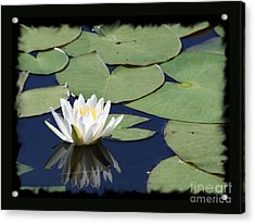 Water Lily With Black Border Acrylic Print by Carol Groenen