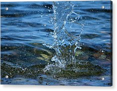 Waterdrops Acrylic Print by Heike Hultsch