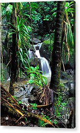 Waterfall El Yunque National Forest Mirror Image Acrylic Print by Thomas R Fletcher