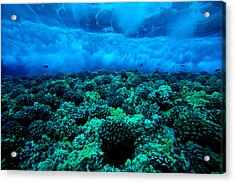 Wave Breaking Acrylic Print by Dave Fleetham - Printscapes