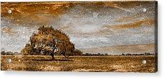 Weathered Acrylic Print by Az Jackson