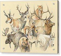Western Heritage Acrylic Print by Steve Spencer