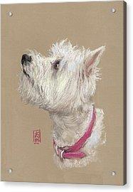 Westie Profile Acrylic Print by Debra Jones