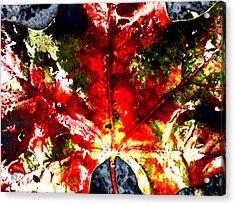 Wet Single Leaf Acrylic Print by Beth Akerman