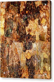 Wet Tree Bark 1 Acrylic Print by Beth Akerman