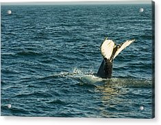 Whale Acrylic Print by Sebastian Musial