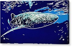 Whaleshark  Acrylic Print by Lanjee Chee