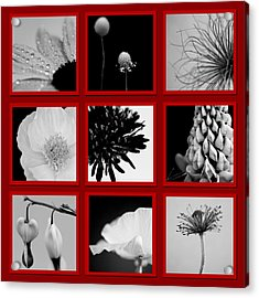 What Is Black And White And Red All Over  Acrylic Print by Lisa Knechtel