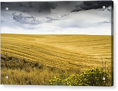 Wheat Fields With Storm Acrylic Print by John Trax