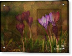 When The Light Paints The Flowers Acrylic Print by Joy Gerow