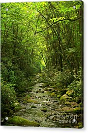 Where It Leads Acrylic Print by M Glisson