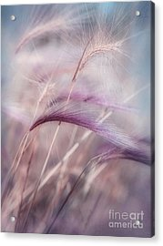Whispers In The Wind Acrylic Print by Priska Wettstein