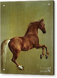 Whistlejacket Acrylic Print by George Stubbs
