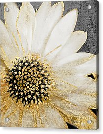 White And Gold Daisy Acrylic Print by Mindy Sommers
