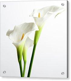 White Arums Acrylic Print by Bernard Jaubert