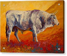 White Bull Acrylic Print by Marion Rose