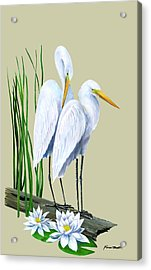 White Egrets And White Lillies Acrylic Print by Kevin Brant