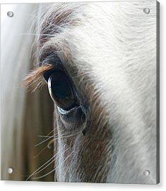 White Horse Eye Acrylic Print by Doug88888