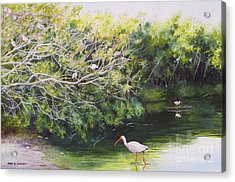 White Ibis Haven Acrylic Print by Karol Wyckoff