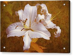 White Lilies. Time To Be Romantic Acrylic Print by Jenny Rainbow