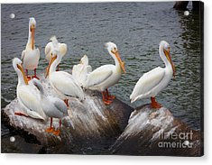 White Pelicans Acrylic Print by Inge Johnsson