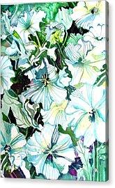 White Petunias Acrylic Print by Mindy Newman