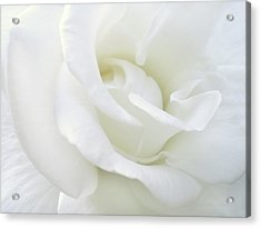 White Rose Angel Wings Acrylic Print by Jennie Marie Schell