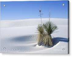 White Sands Dune And Yuccas Acrylic Print by Sandra Bronstein