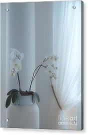 White Series Soft Acrylic Print by Joyce Hutchinson