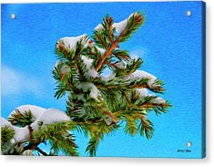White Snow On Evergreen Acrylic Print by Jeff Kolker