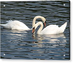 White Swans Acrylic Print by Joyce Woodhouse