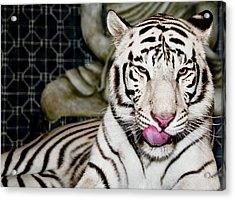White Tiger Acrylic Print by Jim DeLillo