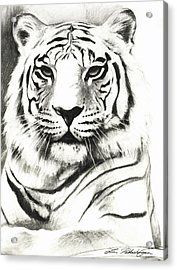 White Tiger Portrait Acrylic Print by Lin Petershagen