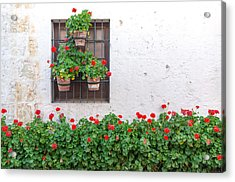 White Wall And Red Flowers Acrylic Print by Jess Kraft
