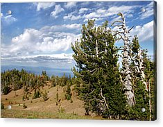 Whitebark Pine Trees Overlooking Crater Lake - Oregon Acrylic Print by Christine Till