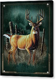 Whitetail Deer Acrylic Print by JQ Licensing