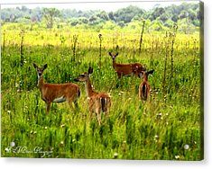 Whitetail Deer Family Acrylic Print by Barbara Bowen