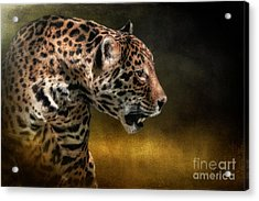 Who Goes There Acrylic Print by Lois Bryan