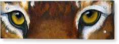 Whos Watching Who   Tiger Acrylic Print by Darlene Green