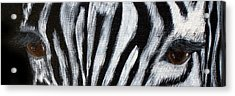 Whos Watching Who   Zebra Acrylic Print by Darlene Green