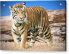 Wild And Untamed Acrylic Print by Judy Kay
