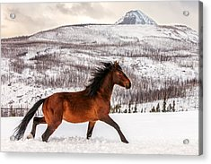 Wild Horse Acrylic Print by Todd Klassy