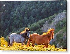 Wild Horses Acrylic Print by Evgeni Dinev